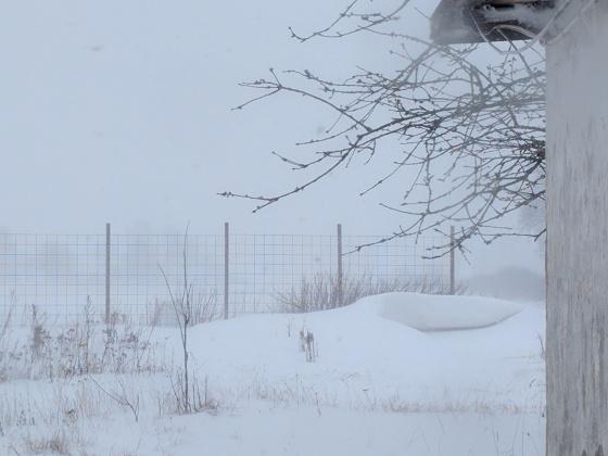 På onsdagen såg det ut så här... inte en chans att man ser till grannen 350 meter bort...